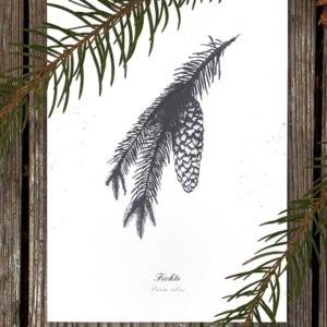 Kräuterpostkarte Fichte – illustrierte Kräuterpostkarten · Herbal Hunter