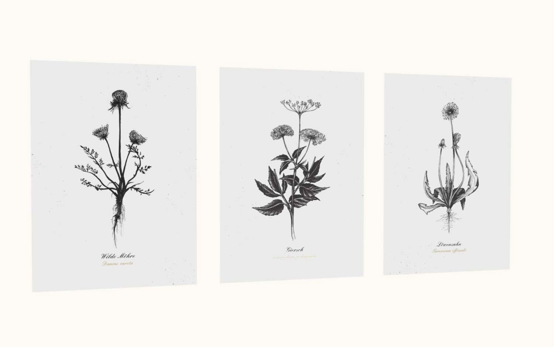 Kräuterpostkarten vom Herbal Hunter –– Kräuterpostkarten-Set essbare Wildkräuter