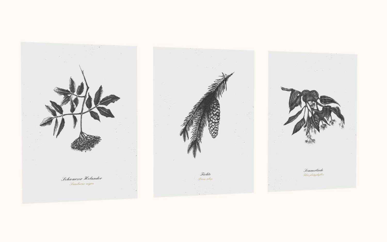 Kräuterpostkarten vom Herbal Hunter –– Kräuterpostkarten-Set essbare Bäume