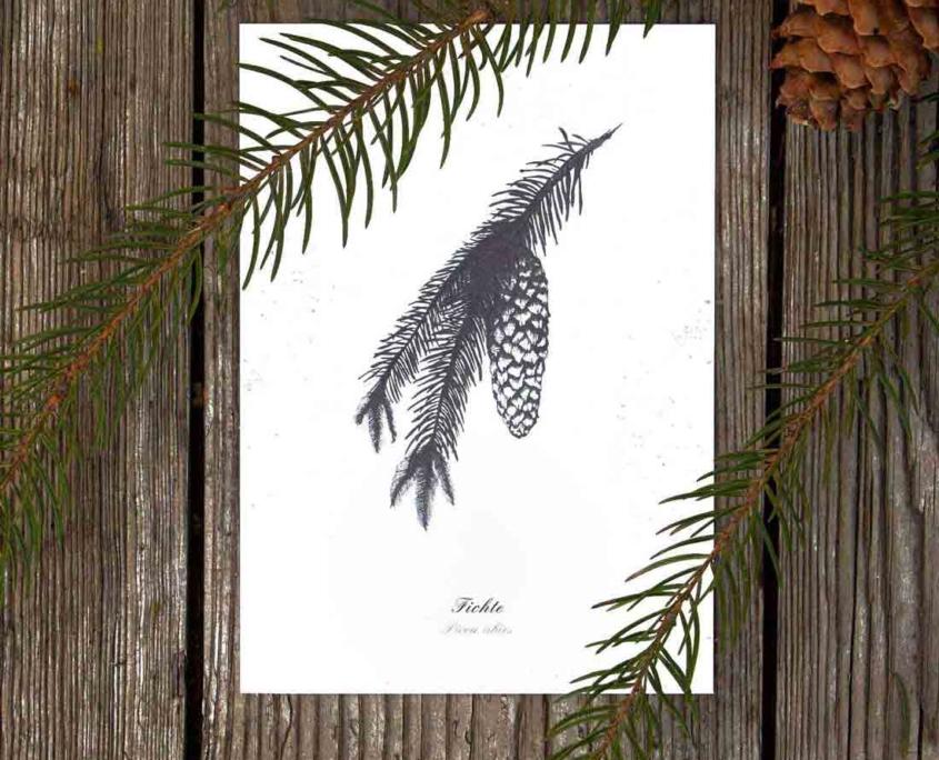 Kräuterpostkarten vom Herbal Hunter –– Sommerlinde